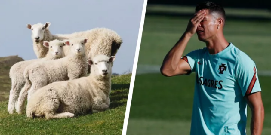 Повіз овець якомога далі від Роналду: сміховинне відео екс-гравця збірної Франції